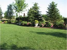 Ideas For Backyard Privacy by Backyards Superb Plant Ideas For Backyard Backyard Furniture