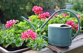 balkon grã npflanzen balkonpflanzen für sonnige und schattige standorte