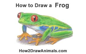 how to draw a frog eyed tree frog
