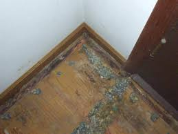 Laminate Flooring And Dog Urine Case Study Almost New Carpet Odorxit