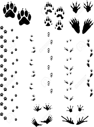 paw prints tracks animals row left