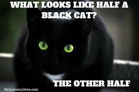 Halloween Cat Meme - halloween joke black cat meme 2 what looks like half a black cat