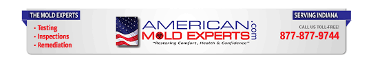 mold experts mold removal inspection testing