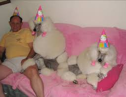 who knew dog birthday parties could be so unsettling funny