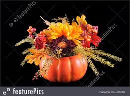 Autumn Flower Autumn Flowers Photo