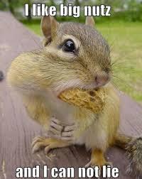 Squirrel Meme - 13 funny squirrel photos and memes