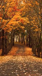 halloween fall wallpaper 100 best fall images on pinterest autumn fall autumn leaves and