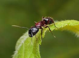 how to prevent grease ants howstuffworks