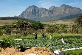 Vegetable Garden Restaurant by Babylonstoren Farm Hotel Restaurants