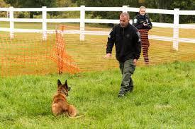 belgian shepherd nova scotia newtown kennel club hosts the 2015 western ct police k 9 challenge