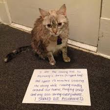 Stupid Cat Meme - stupid cats archives humormeetscomics