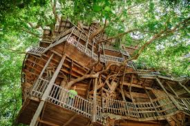 world s best house plans world u0027s largest treehouse for le monde architecture pinterest