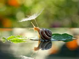 imgur nreeds more snails album on imgur