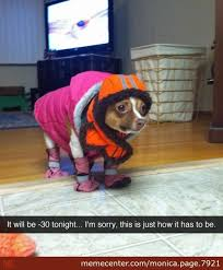 So Cold Meme - it s so cold here in new york by monica page 7921 meme center