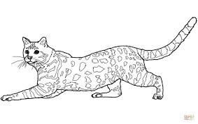 savannah cat coloring page free printable coloring pages