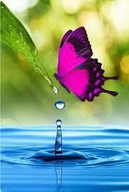 188 best butterflies images on pinterest butterflies beautiful