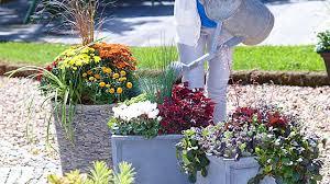 pflanzen fã r den balkon chestha pflanzen idee terrasse