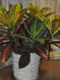 funeral plants affordable funeral plants delivered in macon ms busy bee