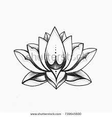black white lotus flower drawing stock images royalty free images