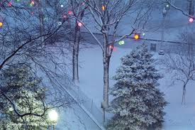 evening snow trees and lights armond scavo photography