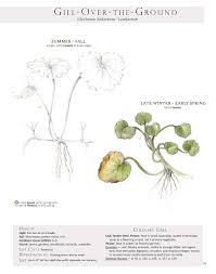 plant id pages gallery full u2014 botanical artist u0026 illustrator