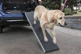 nissan rogue on sale is nissan u0027s rogue dogue a good place to put dogs or a dog prison