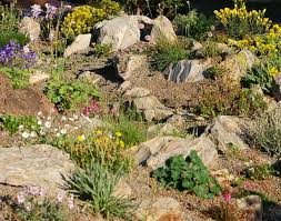 alpine rock garden plants