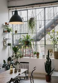 Plants That Survive With No Light Best 25 House Plants Ideas On Pinterest Plants Indoor Indoor
