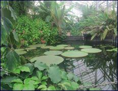 Ventnor Botanic Gardens Ventnor Botanic Garden Entrance Fees Confirmed Isle Of Wight News