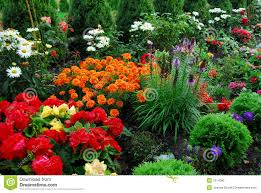 flowers and trees in garden stock photo image 7514080