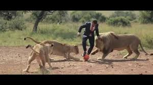 a world u0027s first kevin richardson playing football with wild lions