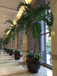 plants for office office plants archives cityscapes