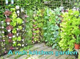 wall gardens maximize growing space indoors and out gardensall