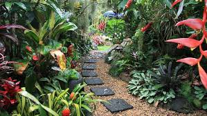 create a tropical garden in your home the plant guide pool and
