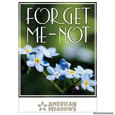 forget me not seed packets forget me not size seed packet american