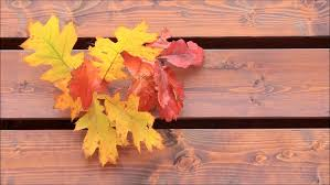 wooden leaves wall autumn leaves on brown wooden wall stock footage 20984929