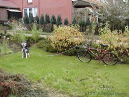 akiak wolf hund info