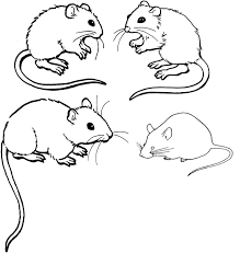 mouse coloring page getcoloringpages com