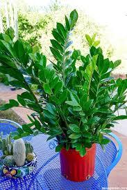 low light houseplants 10 easy care houseplants for low light