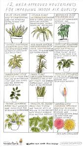best plants for air quality 12 nasa approved houseplants for improving indoor air quality the