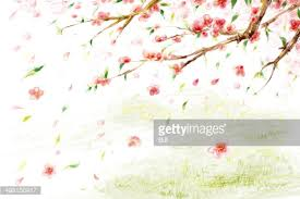 Peach Flowers Peach Flowers Stock Illustration Getty Images