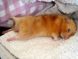 Hamster Bed Confessions Of A Cancer Patient Daily Diary Of A Woman Diagnosed