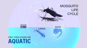 Mosquito Backyard End The Mosquito Cycle In Your Backyard Cnn
