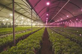 philips led grow light philips lighting launches next generation led grow ls for