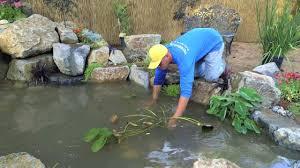 how to build a fish pond part 21 pond plants u0026 waterfall