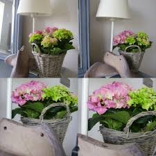 potare le ortensie in vaso ortensia in vaso cheap semi sacchetto di ortensia semi di fiori