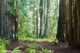 the trees grove