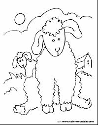 remarkable lamb sheep coloring lamb coloring