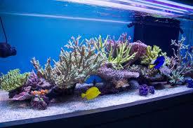 Floating Aquascape Reef2reef Saltwater And Reef Aquarium Forum - andrew graham u0027s v1 rotate u0027a reef in the sky u0027 aquarium reef