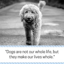 grieving the loss of a dog 30 powerful quotes about losing a dog dealing with grief puppy leaks